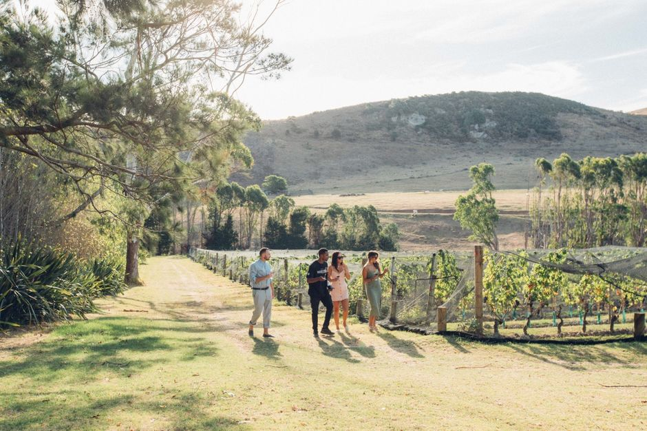 Friends in the vines, Stonyridge Vineyard