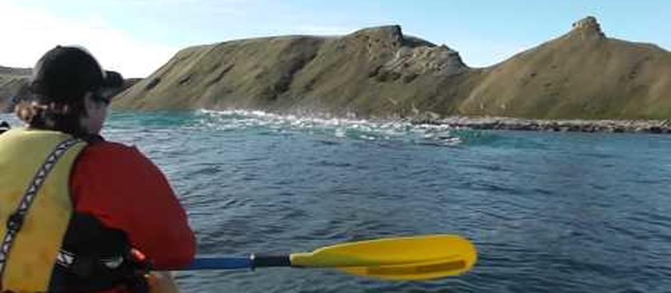 Kayakers watch a Fur Seal eating an Octopus on a guided tour