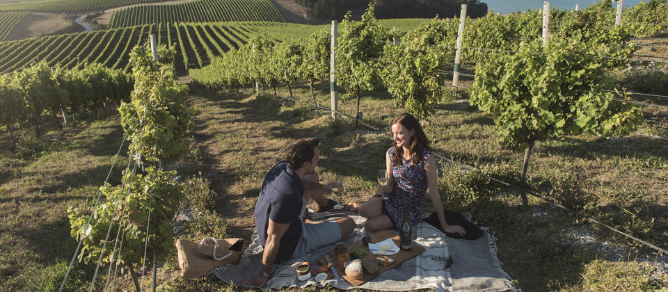 In the Marlborough region, at the top of New Zealand's South Island, you can taste world-famous wines amid stunning scenery.