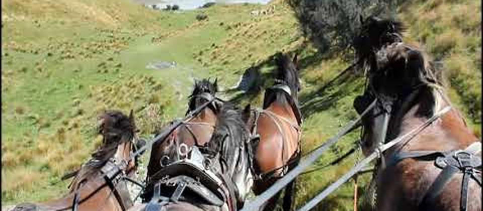 """Clippity Clops"" Scenic Day Tour from Christchurch - Clydesdale Horses High Country Wagon Ride"